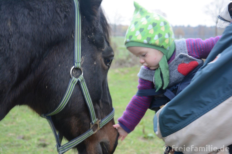 Wir besuchen unser Welsh Pony!