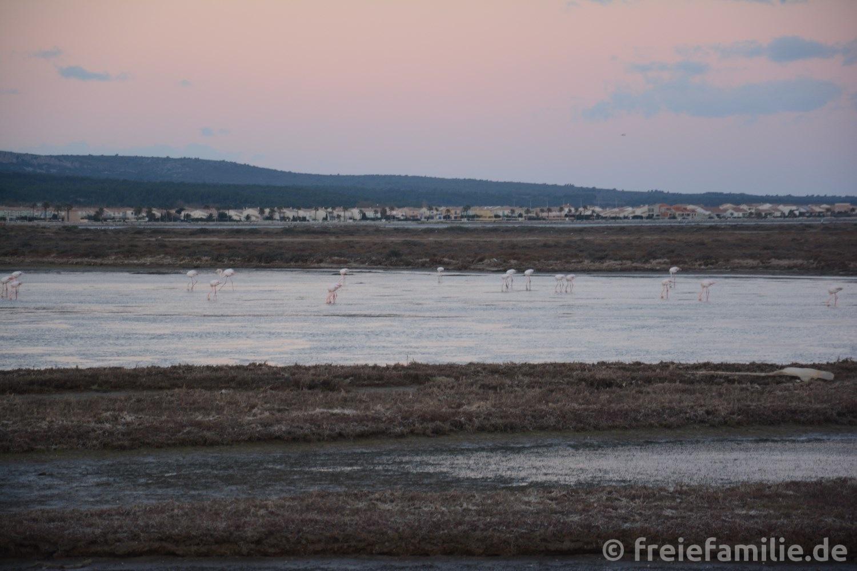 Flamingos begrüßen uns am Mittelmeer!